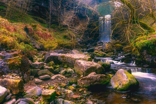 Фото водоём, лес - обои на стол