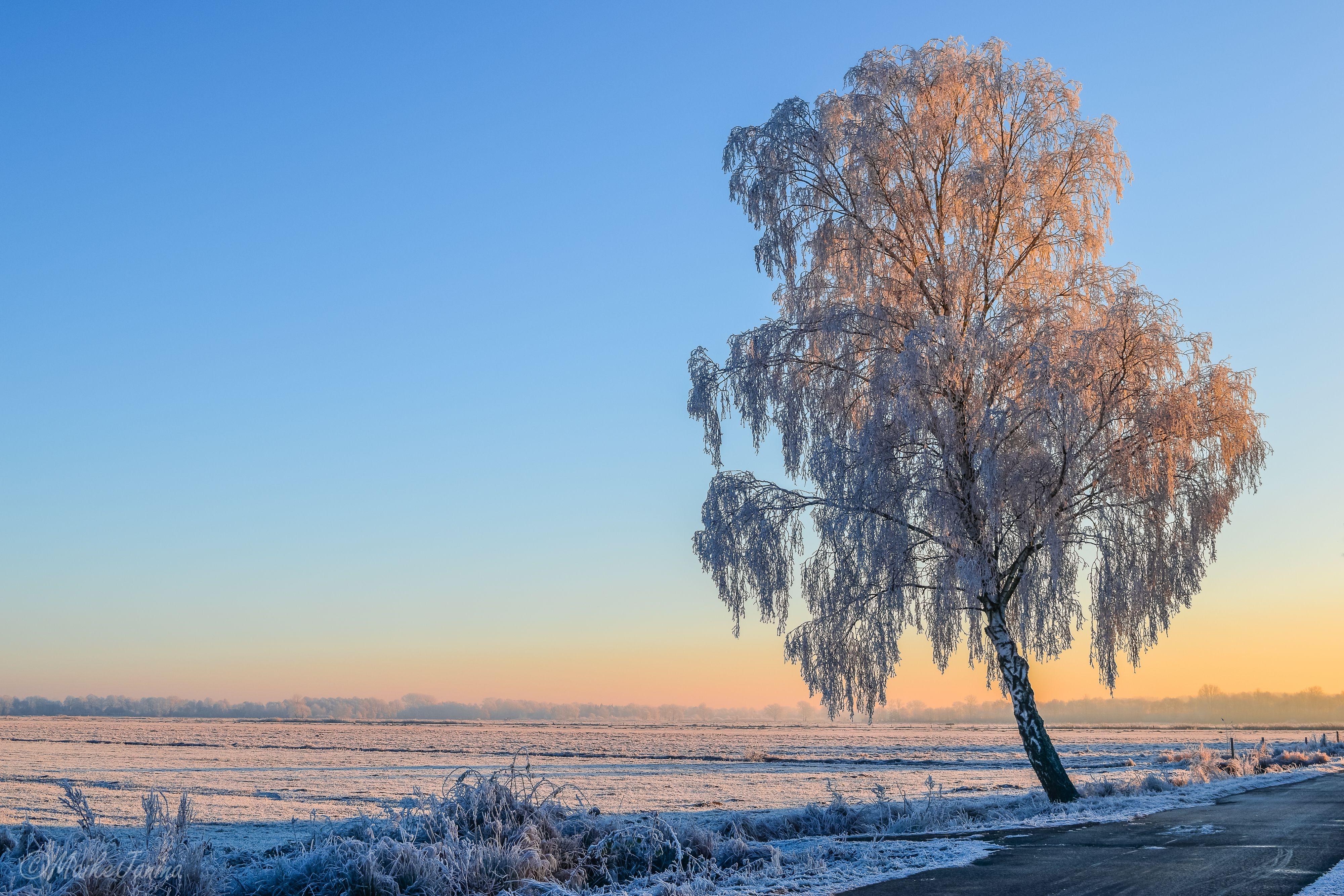 Обои закат, зима, поле, дерево