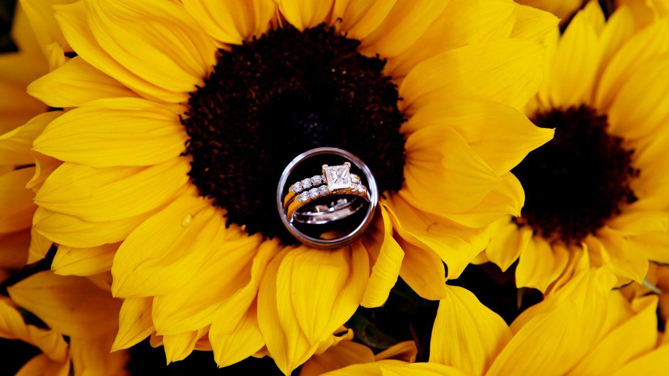 Подсолнух и обручальное кольцо · бесплатное фото
