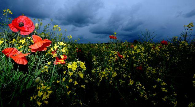 Заставки облака, поле, маки