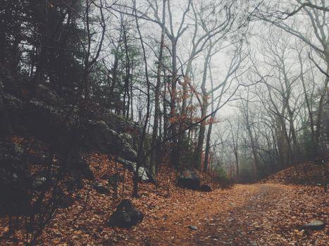Фото бесплатно старовозрастный лес, государственный парк, лист