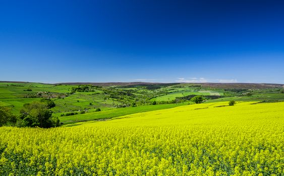 Photo free Rape fields, Bradfield, Peak District