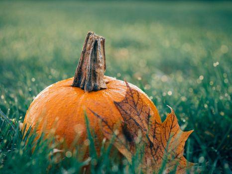 Photo free vegetable, pumpkin, free images