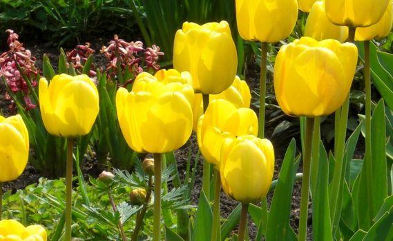 Фото бесплатно зелень, обои, весна
