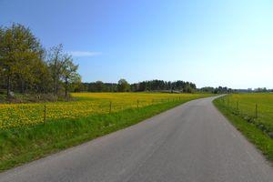 Бесплатные фото весна,поле,дорога,цветы,деревья,пейзаж