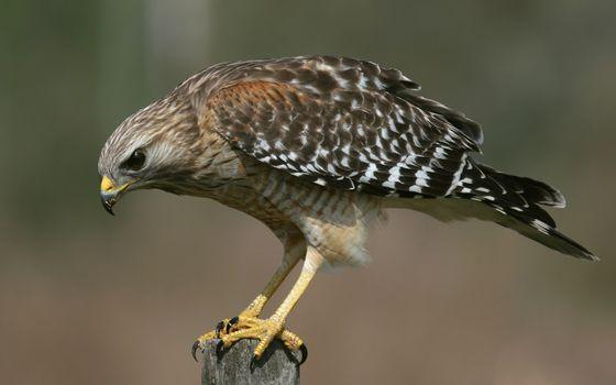 Фото бесплатно перья, птица, птицы