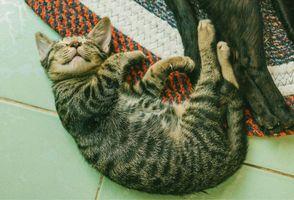 Бесплатные фото котенок,сон,ложь,kitten,sleep,lies