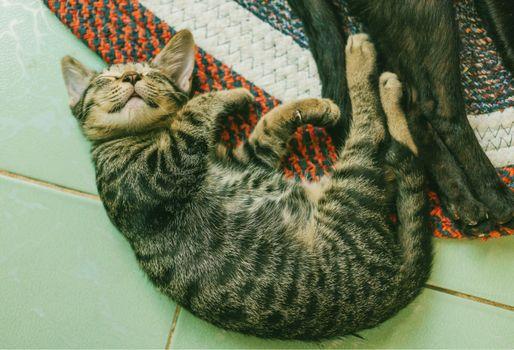 Фото бесплатно котенок, сон, ложь