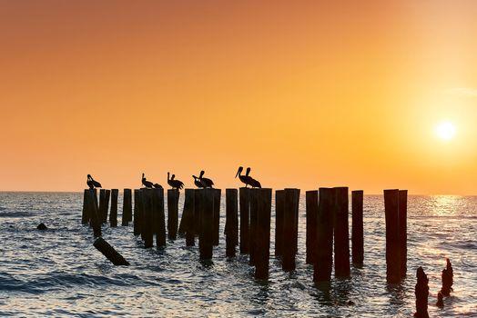 Бесплатные фото Неаполь Пирс,Флорида,закат,море,пейзаж