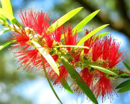 Photo free plant, shapes, flower