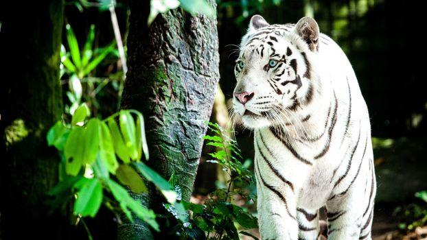 Фото бесплатно лес, хищник, величественная