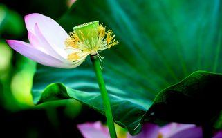 Фото бесплатно красивые цветы, флора, цветы