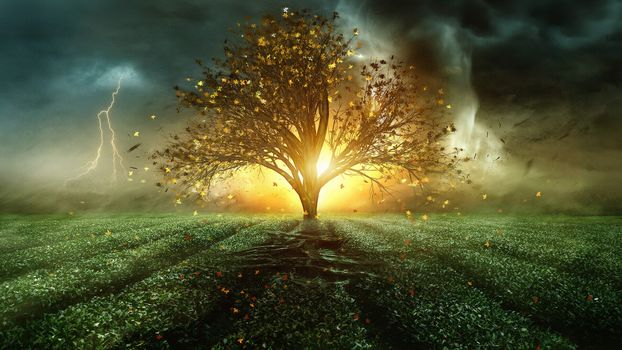 Фото бесплатно чайное поле, шторм, молния