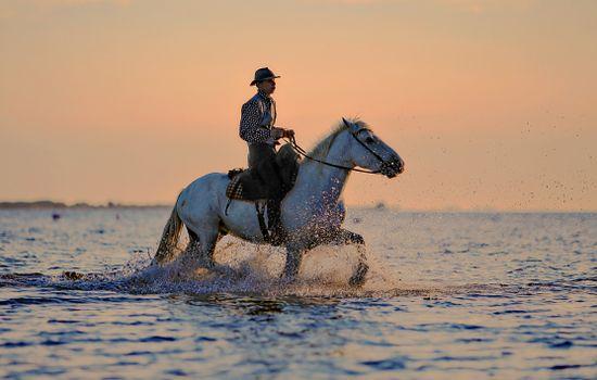 Photo free horse, sea, hiking