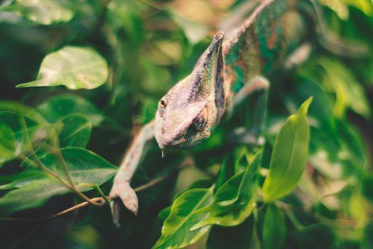 Photo free iguana, lizard, reptile
