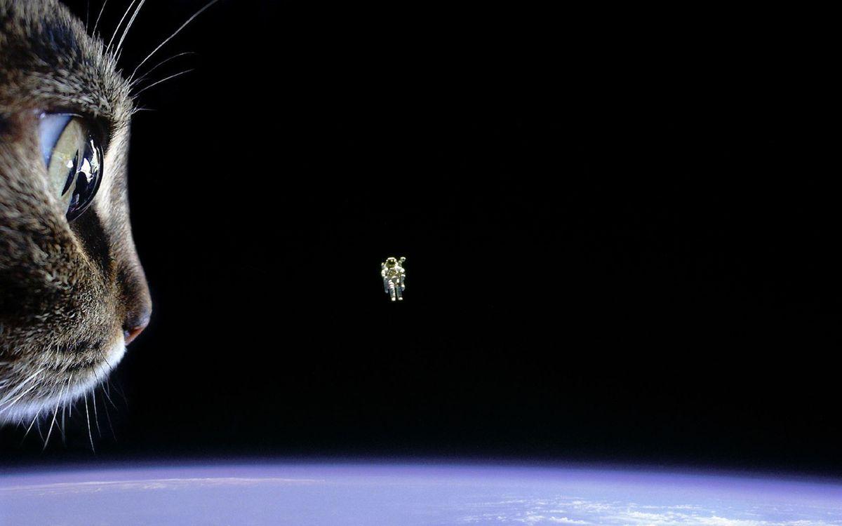 Фото бесплатно пейзаж, кот, космос, космонавт, юмор, юмор