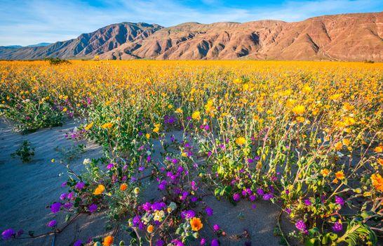 Фото бесплатно парки калифорнии, горные парки, парки сша