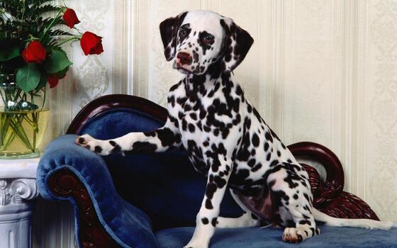 Photo free chair, dog, vase