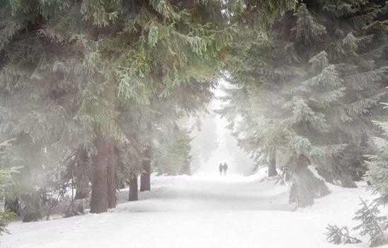 Фото бесплатно холодный, зимняя буря, лес