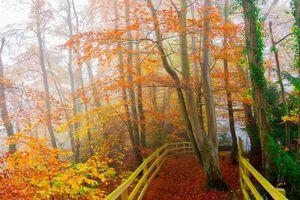 Бесплатные фото осень,парк,деревья,туман,дорога,пейзаж