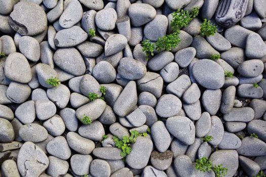 Photo free pebble, stone wall, soil