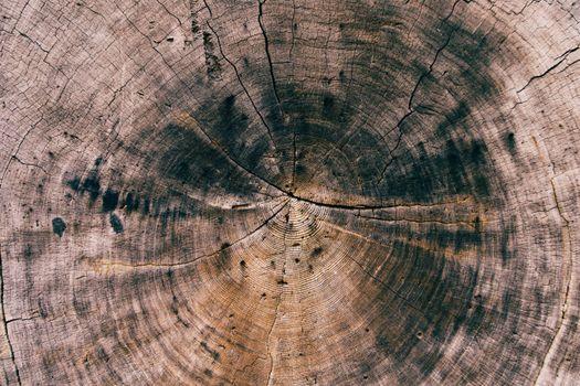 Photo free tree, wood, photos