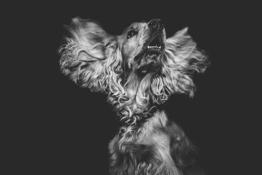 Фото бесплатно собака, морда, м т