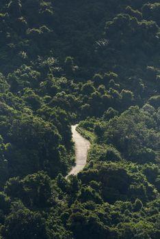 Заставки тропический лес, дорога, горы