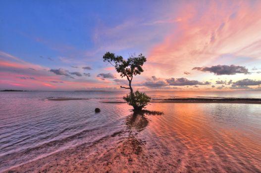 Бесплатные фото залив,Веллингтон,Квинсленд,Австралия,дерево,мангровое дерево,рябь,волна,небо,море,закат солнца,мелководье