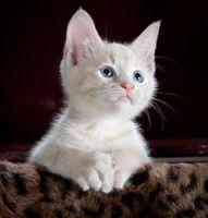 Фото бесплатно кошки, кошачий, млекопитающее