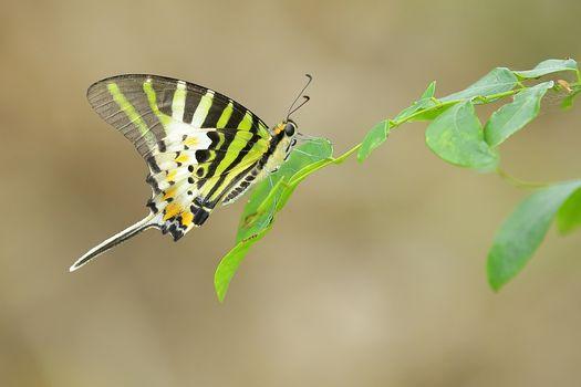 Фото бесплатно насекомое, насекомые, бабочка