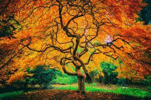 Заставки японский сад, осень, дерево, листья, пейзаж