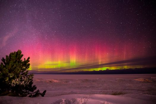 Photo free northern lights, trees, snow
