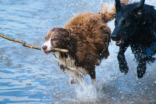 Photo free dogs, play, water