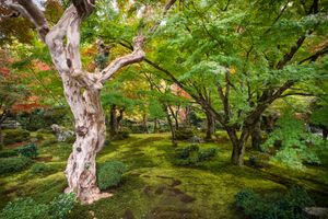 Фото бесплатно природа, kyoto, Япония