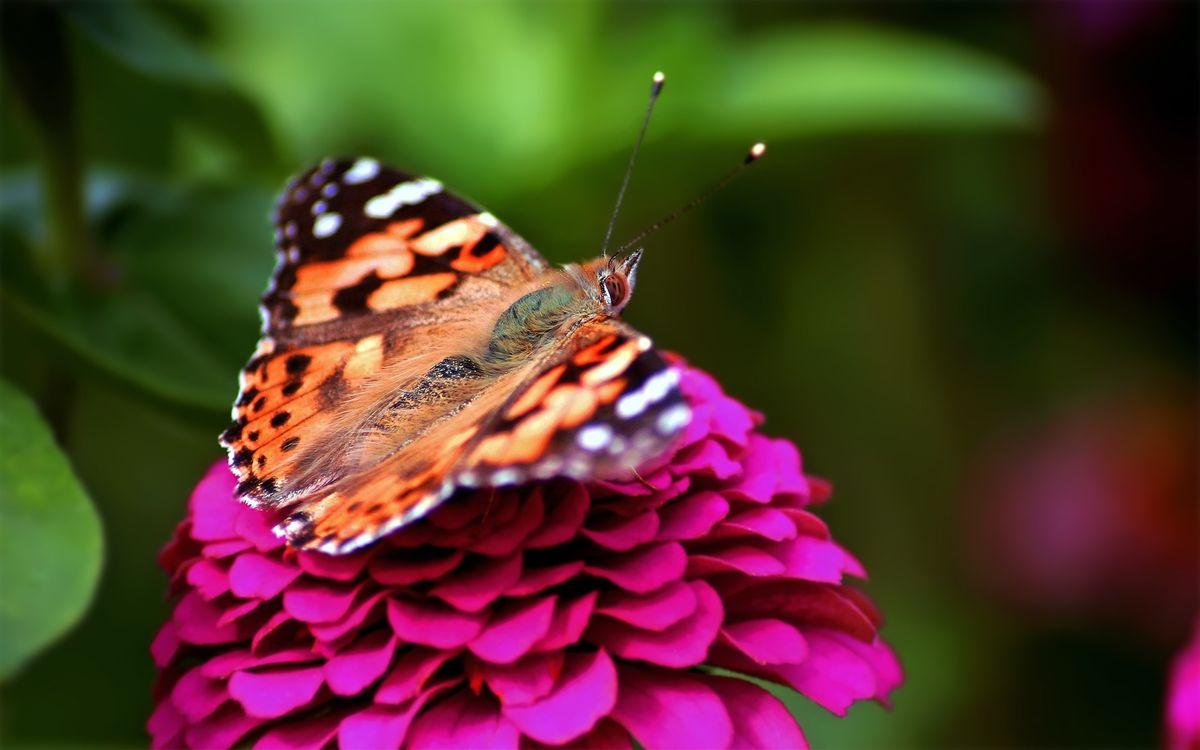Фото красный бабочка насекомое - бесплатные картинки на Fonwall