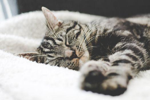 Фото бесплатно кот, полосатый, сон