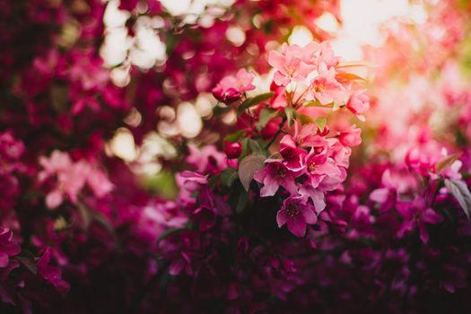 Фото бесплатно Flowers, Pink, Tree