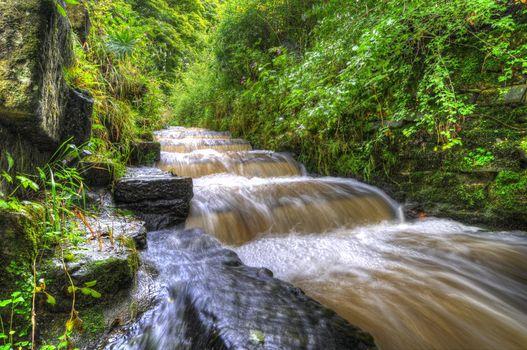 Фото бесплатно река, лес, кустарник