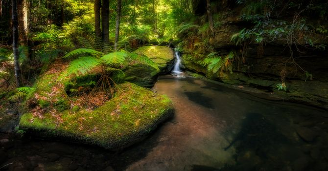Photo free Australia, landscape, tropical forest
