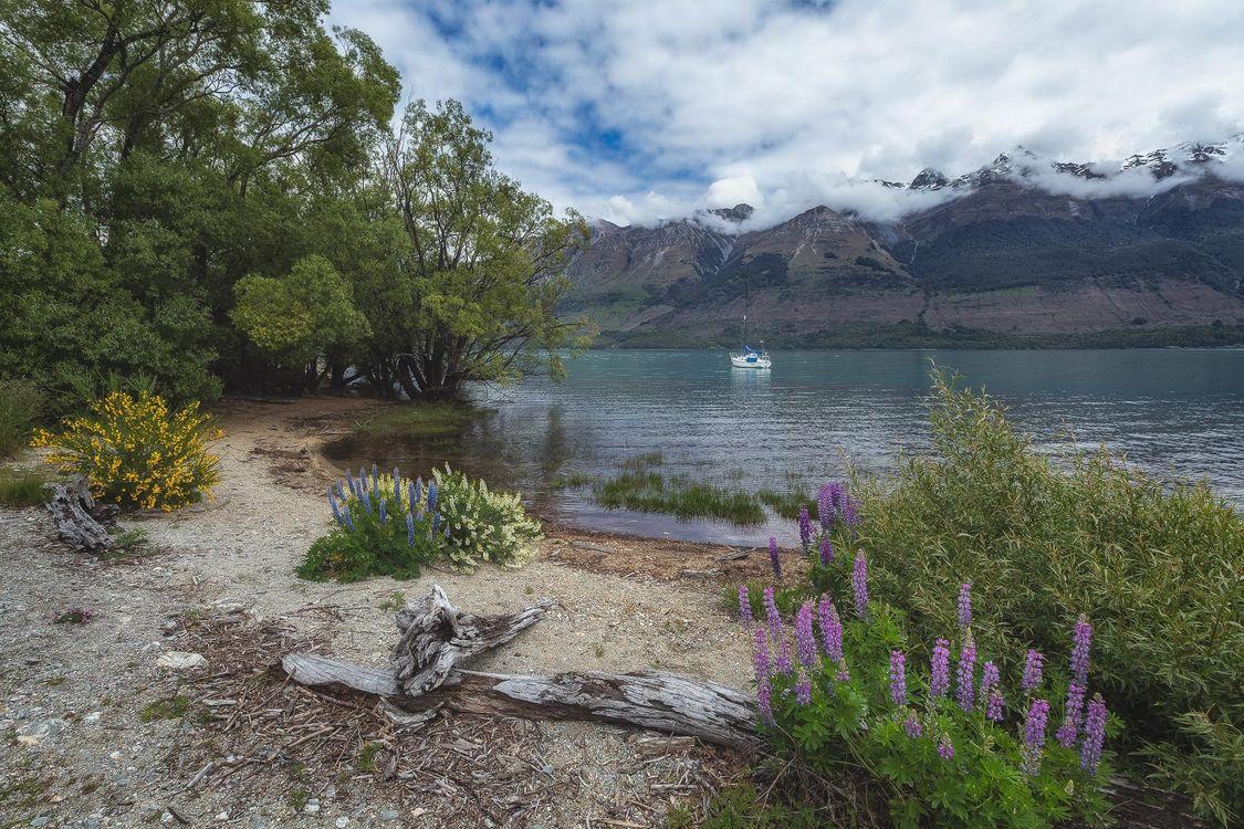 Фото бесплатно Новая Зеландия, Люпин, полевые цветы, лето, Южный остров, Снежные горы, Озеро Вакатипу, Ремаркаблс, пейзажи