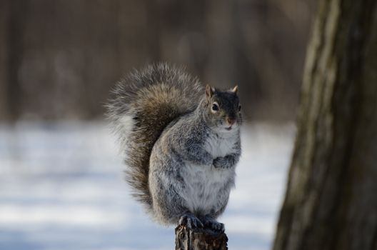 Photo free animal, squirrels, eyeing