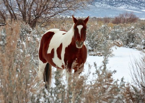 Photo free horse, snow, winter