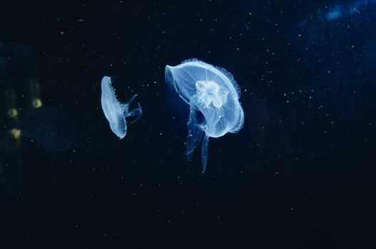 Photo free jellyfish, underwater world, tentacles