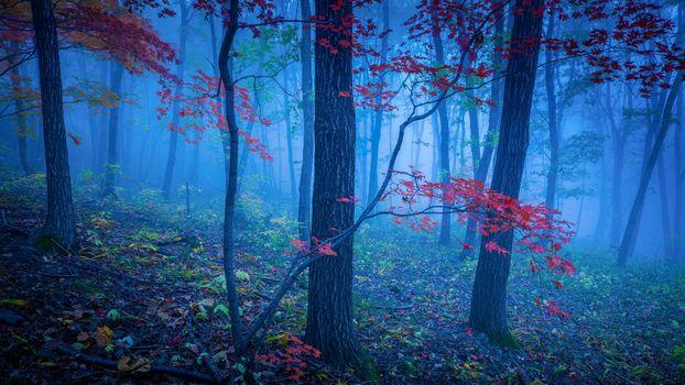 Фото бесплатно рассвет, деревья, природа