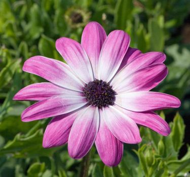 Photo free photoshoot, petal, pink