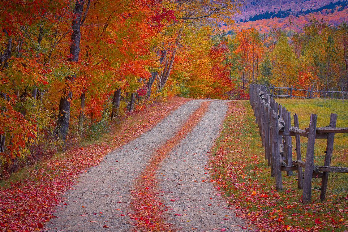 Фото бесплатно деревья, пейзаж, забор - на рабочий стол