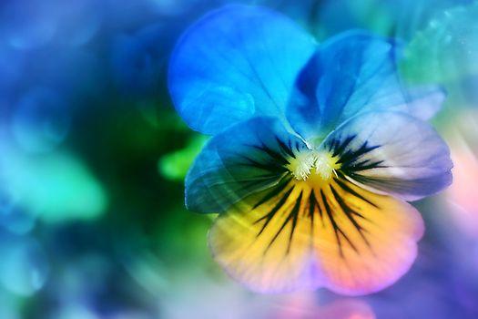 Фото бесплатно Viola, икебана, цвет
