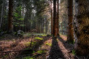 Фото бесплатно природа, тень, Германия