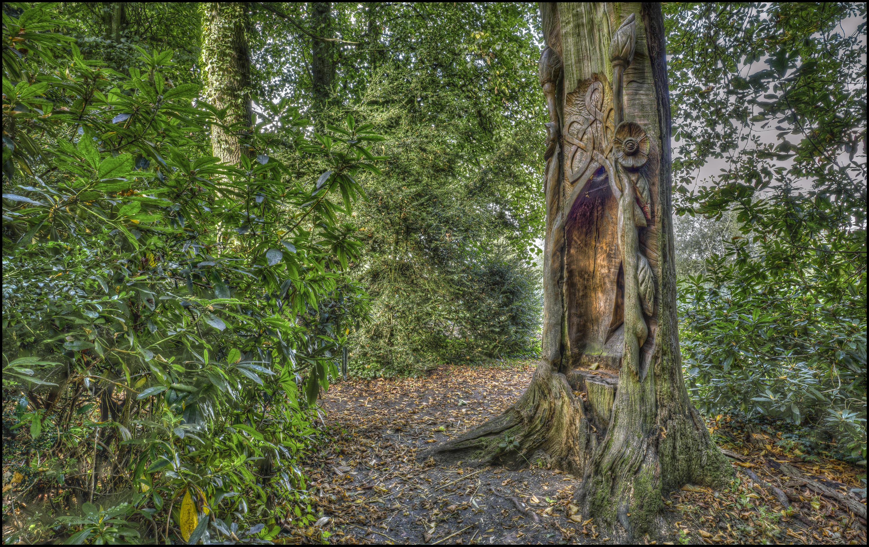 обои парк, дорога, деревья, природа картинки фото